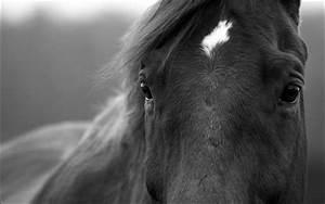 Schwarz Weiß Bilder Tiere : schwarz wei foto bild tiere haustiere pferde esel maultiere bilder auf fotocommunity ~ Markanthonyermac.com Haus und Dekorationen