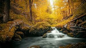 Stream, On, Yellow, Foliage, Covered, Rock, During, Daytime, Hd