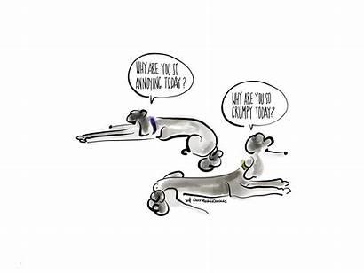 Ink Drawings Poodles