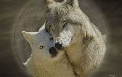 Wolf Wolves Wallpapers Background Teddybear64 Desktop Fanpop