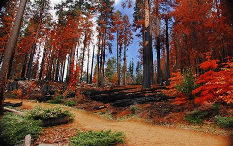 Landscapes Trees Autumn Forests National Park Yosemite