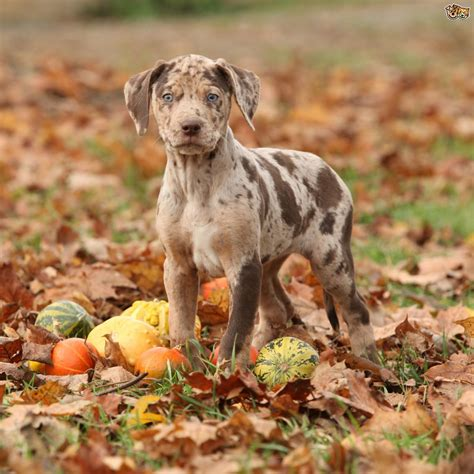 Dogs That Shed The Least by 10 Of The World S Rarest Dog Breeds Pets4homes