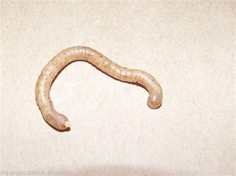 vet cde parasites proprofs quiz