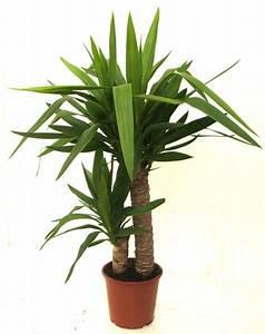 Plante Balcon Facile D Entretien : plantes faciles d 39 entretien ~ Melissatoandfro.com Idées de Décoration