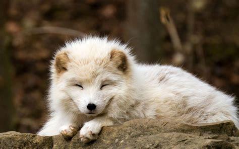 Permalink to Nature Wallpaper Animals