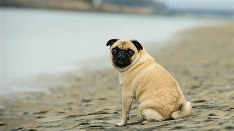 6 Dog Breeds That Don't Do Well In The Water