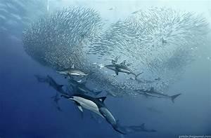 Wonderful underwater photos captured by a software ...