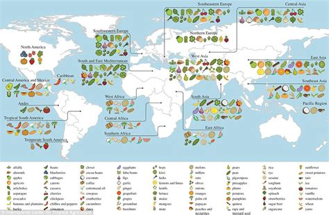 cuisine origin map shows where the 39 s food comes from daily mail