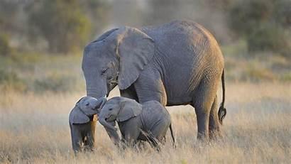 Elephant Playing Wallpapers Animals Animal Elephants Desktop