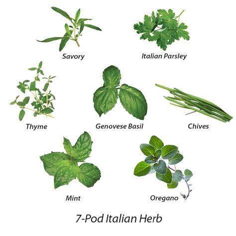 how to herbs italian herb seed kit 6 7 pod grow herbs indoors aerogarden