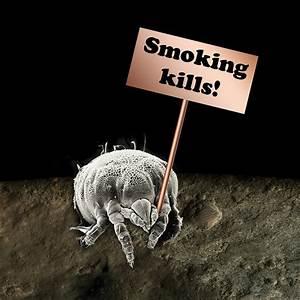 Pflanzen Für Raucher : raucher als vogelsch tzer tageswoche ~ Markanthonyermac.com Haus und Dekorationen