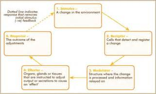 stimulus response feedback model bio sciences