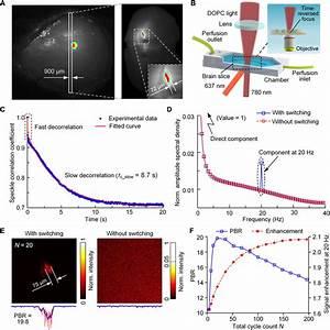Focusing Light Inside Live Tissue Using Reversibly