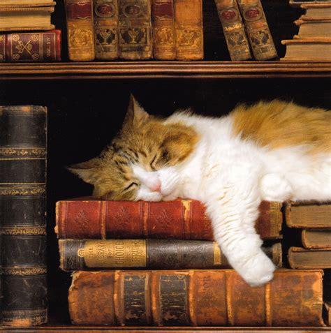 Resultado de imagen de librsos bibliotecas con gatos