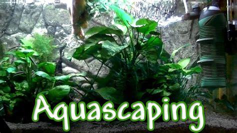 aquarium pflanzen düngen aquarium pflanzen einpflanzen aquascaping
