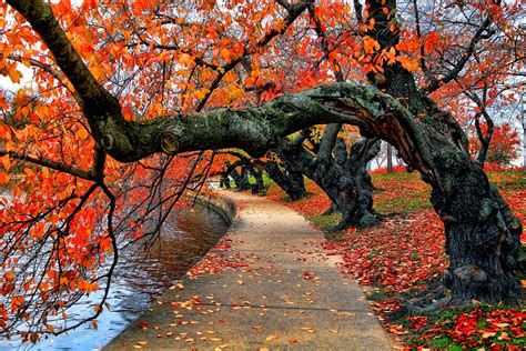 nature river bench water park trees leaves colorful autumn