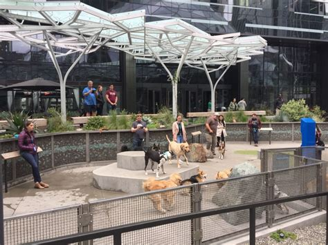 amazon dog park seattle crystal employees headquarters washingtonian dc potential thing never leave affect dining ways could scene area