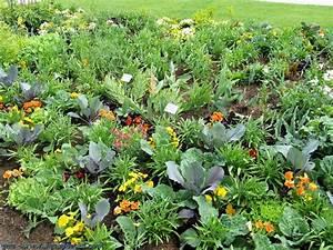 Plantes Amies Et Ennemies Au Potager : potager d finition et explications ~ Melissatoandfro.com Idées de Décoration