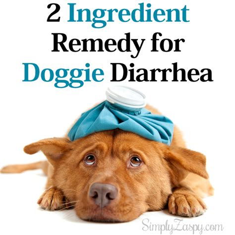 puppy diarrhea how to cure doggie diarrhea archives simply zaspy