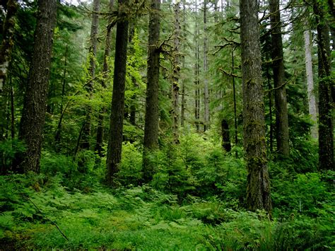 The different types of forests: everything you need to know