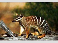 Unique Animals of Australia Fascinating Animals