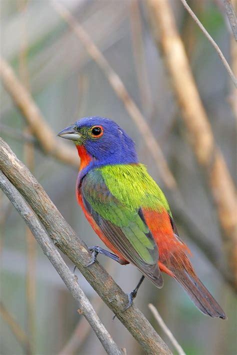 south carolina bird beautiful birds pinterest