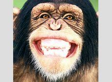 Psychologie Als die Evolution das Lachen erfand WELT