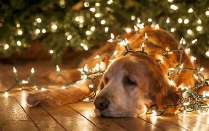 Christmas Lights Animals Funny Bright Humor Dogs