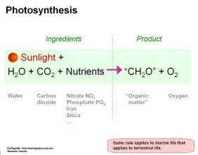Photosynthesis Chemical Equation