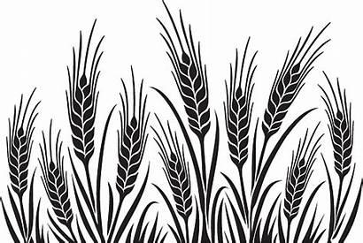 Wheat Field Vector Illustration Uncrop Clip Illustrations