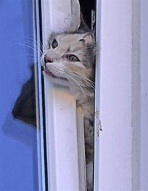 feuerwehr rettet katze aus der todesfalle titisee