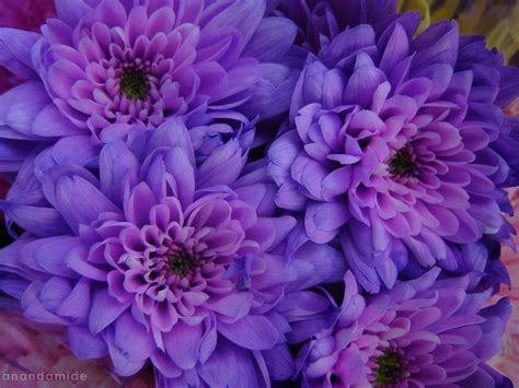 Purple Flowers Desktop Wallpapers This Wallpaper