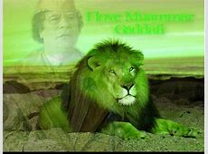 Green Pakistani Lion wwwpixsharkcom Images Galleries