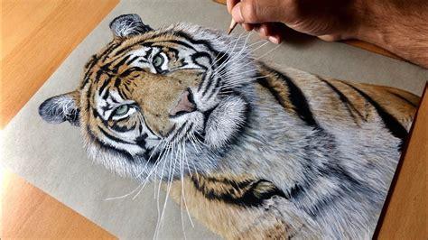 drawing  sumatran tiger kirana timelapse artology