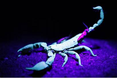 Scorpio Wallpapers Scorpion Wallpapertag Mobile Related