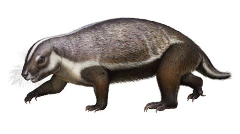 'Crazy beast' fossil find shows evolutionary weirdness of