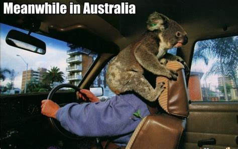 Australia Memes - 27 hilarious australia memes that perfectly describe living down under