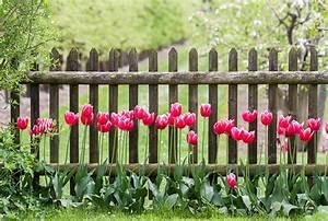 Immergrüne Kletterpflanze Winterhart : kletterpflanzen fr den zaun stauden schnell wachsend 2019 ~ Yasmunasinghe.com Haus und Dekorationen