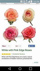 What does pink tipped white roses mean? - Quora