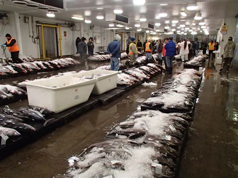 Commercial Fishing Boat Auction by Related Keywords Suggestions For Honolulu Fish Market