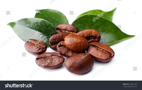Coffee Beans Leaves Isolated On White Stock Photo Bulletproof Coffee Erewhon Chicory For Digestion How To Make Mirror Table Sprouts Reviews Krups Maker Clogged South Africa Dandelion