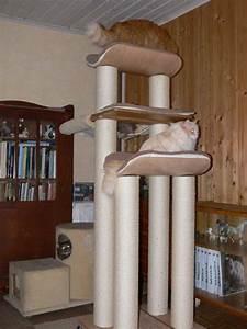 Seil Für Kratzbaum : sibirische waldkatzen und neva masquarade aus berlin brandenburg news siberian cats and neva ~ Orissabook.com Haus und Dekorationen