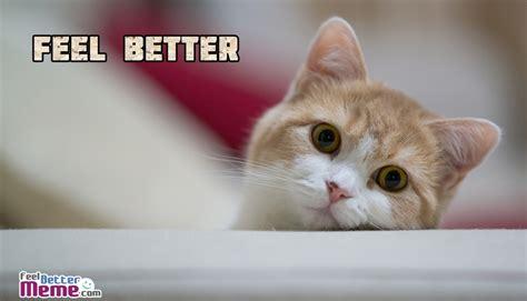 Feel Better Meme - feel better meme pictures with cat