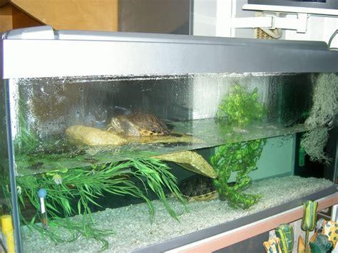 mes 2 tortues et leur aquarium