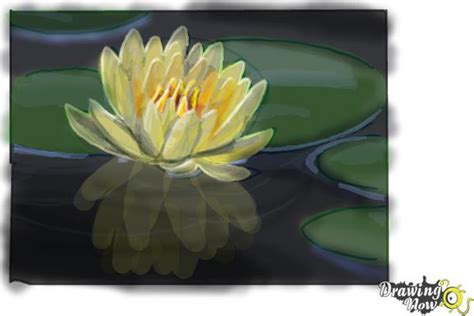 draw  lotus flower water lily drawingnow