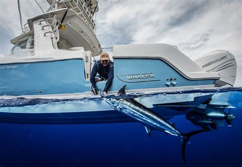 types  boats boston whaler