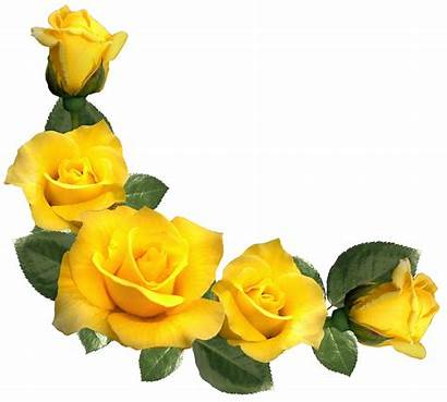 Yellow Roses Rose Flower Clipart Border Transparent