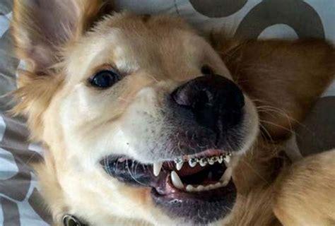 dog braces studio dentaire