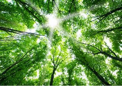 Nature Forest Wallpapers Cooldigital Cool Alberi Vite
