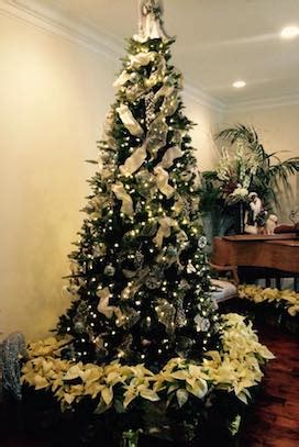 decorated christmas fraser fir trees